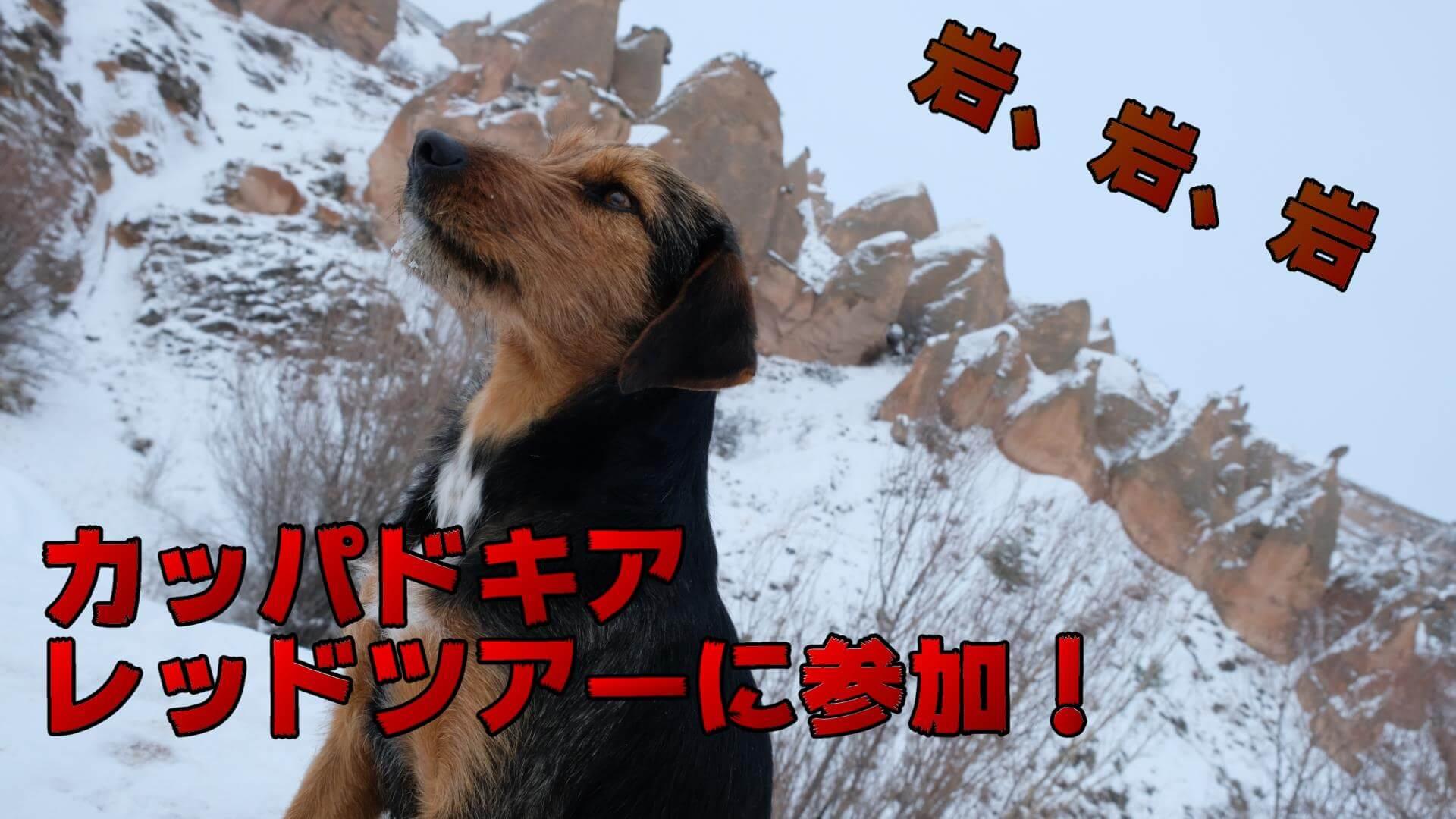 【カッパドキア】ギョレメでレッドツアーに参加!一生分の岩を鑑賞!